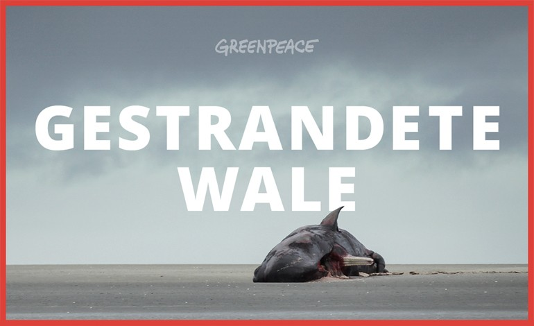 Greenpeace Stranded Whales